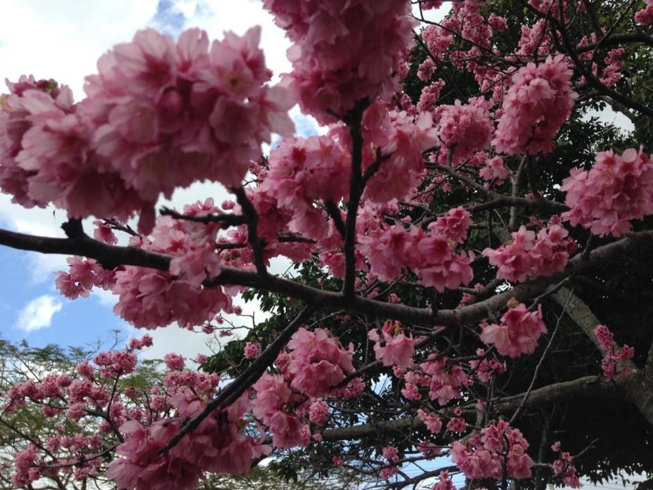 桜の季節がやってきました!!:イメージ